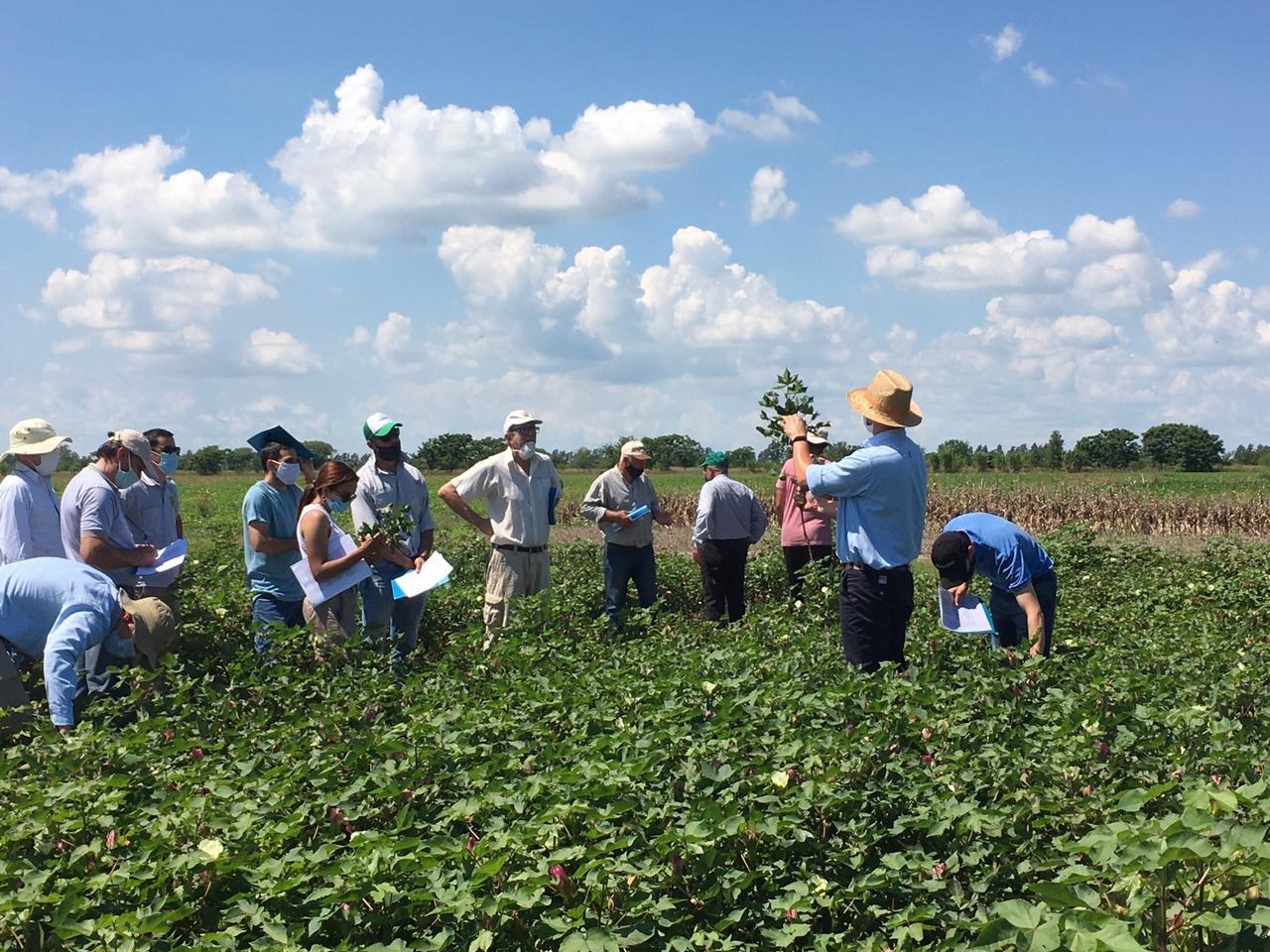 Jornada de cultivo de algodón para técnicos 20/21 – INTA Reconquista